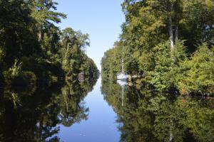 Boat floating in the Dismal Swamp Canal