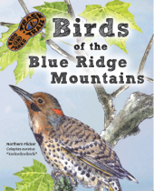 Birds of the Blue Ridge Mountains brochures
