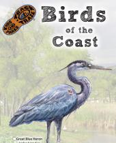 Birds of the Coast brochure