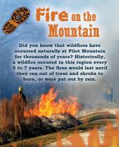 Fire on the Mountain brochure