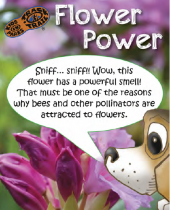 Flower Power brochure