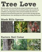 Tree Love scorecard thumbnail