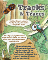 Tracks and Traces brochure