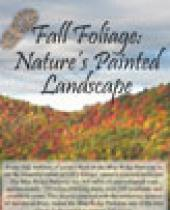 Fall Foliage: Nature's Painted Landscape Brochure