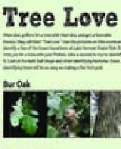 """Tree Love"" scorecard"