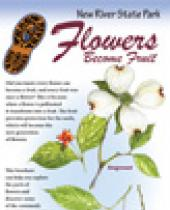 New River: Flowers become Fruit brochure