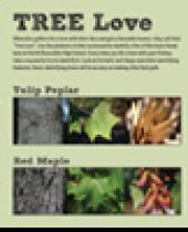 """Tree Love"" scorecard"