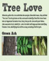 Angostura Tree Scorecard brochure
