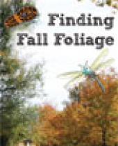 Finding Fall Foliage brochure