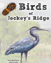 Birds of Jockey's Ridge brochure