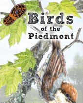 Birds of the Piedmont brochure thumbnail