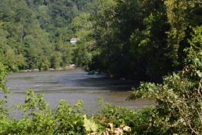 French Broad River surrounded by trees