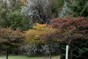 Fall foliage on native trees