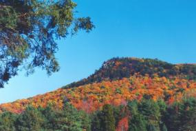 Bright fall colors on the mountain