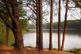 View of lake through trees