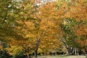 Mulch path through autumn foliage