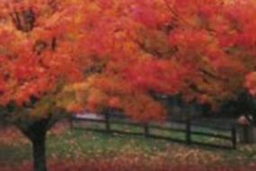 Red fall foliage