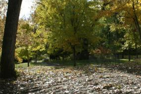 Sunlight streaming through fall foliage