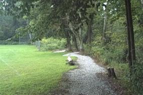 Gravel trail under trees