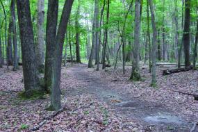 Claytor lake trail