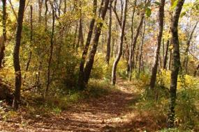 Forest trail in fall