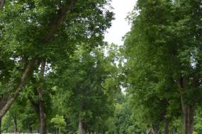Tree-lined paved path