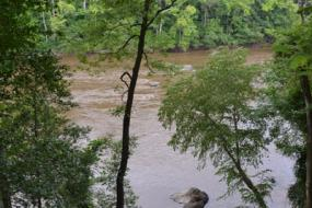 View of the Cape Fear River through the trees
