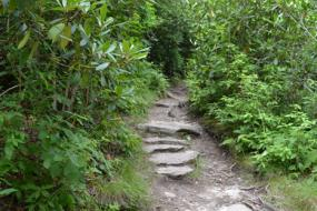 Rocky path surrounded by rhododendron