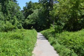 Paved path through dense vegetation