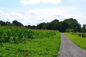 Gravel path through farm fields