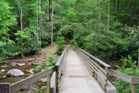 Wooden bridge over stream