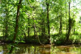 Trees on the banks of Cedar Creek