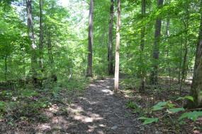 Dirt path through the woods