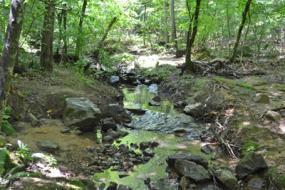Rocks in a gentle stream