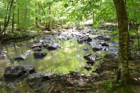 Wide rocky stream through the woods