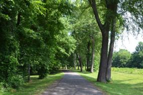 Paved path through trees