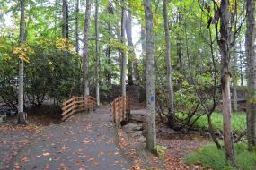 Small bridge on the Hungry Mother State Park TRACK Trail