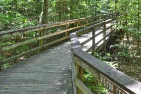 Wooden boardwalk through forest