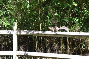 Squirrel on a fence rail