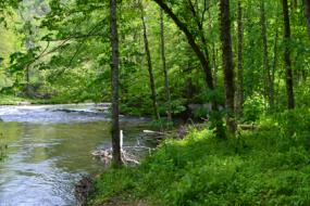 The banks of the Oconaluftee River