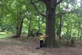 Large sprawling tree