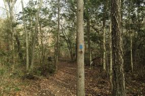 Trail winding through the trees