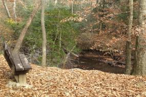 Bench overlooking stream