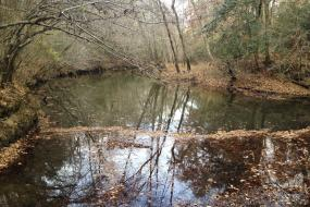 Leaves floating in the creek