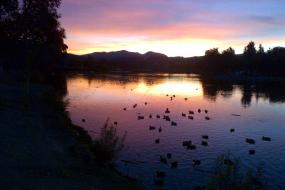 Ducks on Lindo Lake at sunset