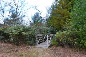 Bridge through a rhododendron thicket