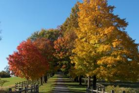 Fall colors along fence-lined road