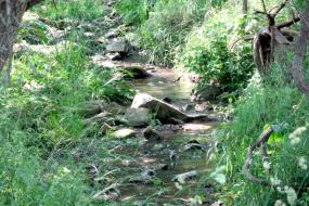 Rocky stream with grassy banks