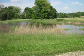 Roulette Pond