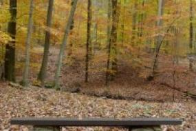Stone bench in autumn